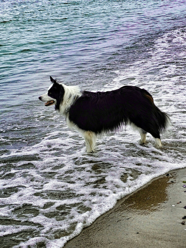 Good evening my friends. ..have a wonderful weekend. .  #nature #emma #dog #sea #photography  #FreeToEdit