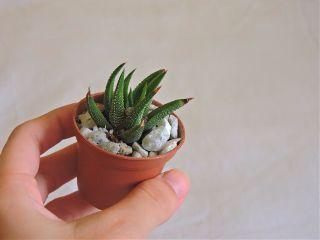 freetoedit aloe plant mini iloved