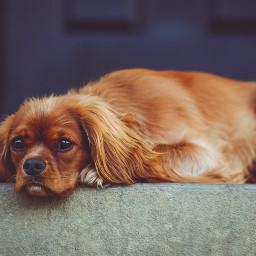 freetoedit cute puppy animal domestic