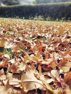 nature naturelovers photography myclick garden