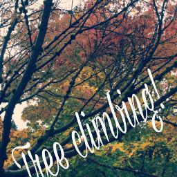 treeclimbing nature fall colorsplash