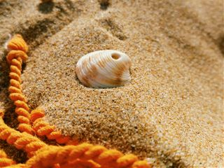 freetoedit shell sand sea summer2016