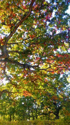 autumn emotions freetoedit