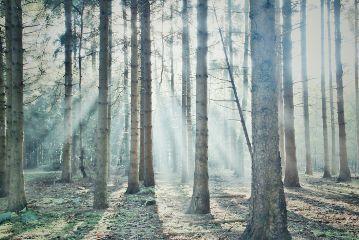 freetoedit nature mist
