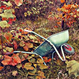 garden wheelbarrow grapeleaves