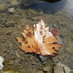 naturephotography leavesfall autumn fall photograph