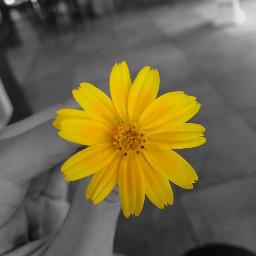 interesting flower nature photography summer