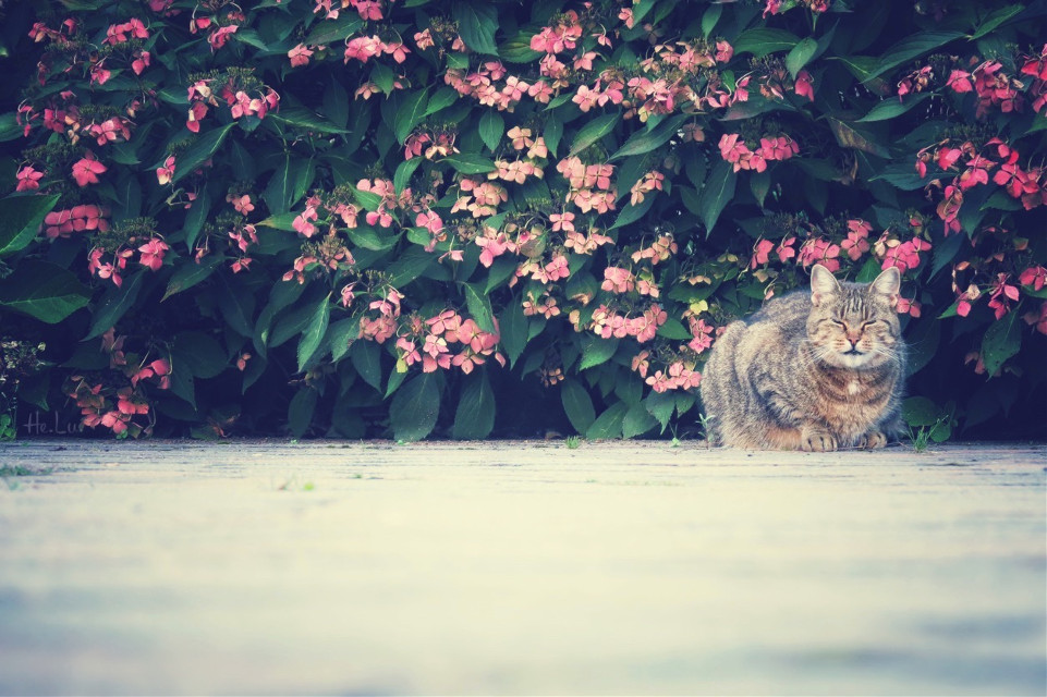 Sleep well Mr. neighbor, the mice will be happy :)  #cat #photography #petsandanimals