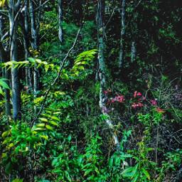 forest virginia