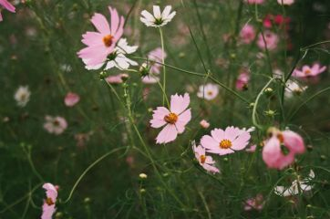 nature photography cosmos travel autumn