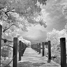 blackandwhite love photography freetoedit infrared