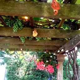 patio flowers hangingflowers