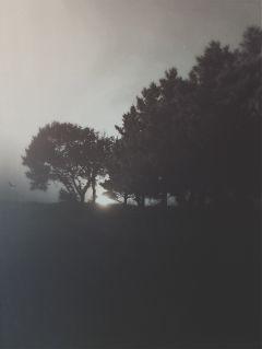 art texture blackandwhite clipart trees