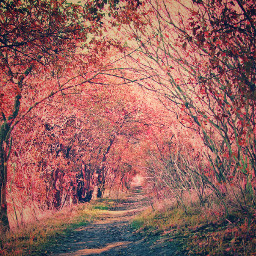colorful nature photography autumn way