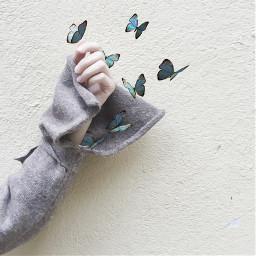 freetoedit repost love fly