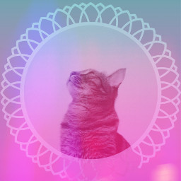 freetoedit kitty gradient colors