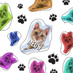freetoedit cat cats cute meow