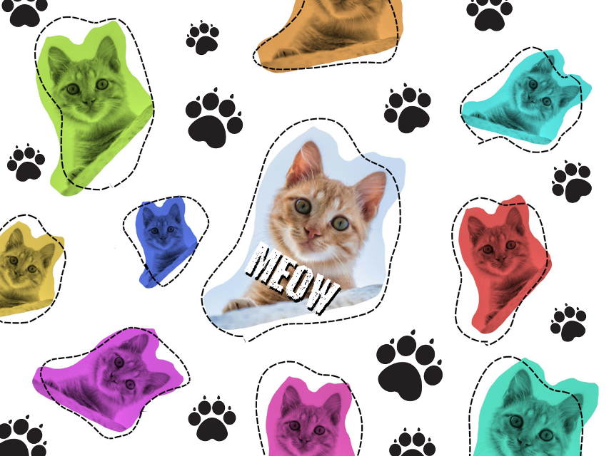 #FreeToEdit #Cat #Cats #Cute #Meow #Kitten #Kitty #Kittens
