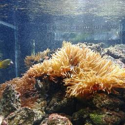 acuario persepctive color natulareza medellinlaciudaddelaeternaprimavera