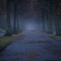 photography bavaria fog autumn freetoedit