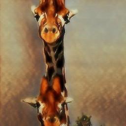 animals africa nature travel freetoedit