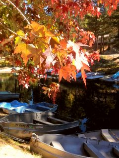 lake tree leaves boats autumnleaves