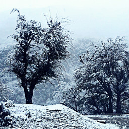 snow forest amol freetoedit photography