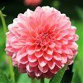 #flowers,#rosequartz,#pretty,#gorgeous,#wow,#freetoedit